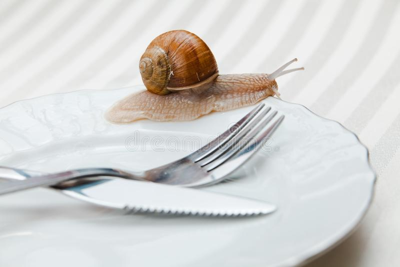 Vid liv snigel på plattan med den okokta gaffeln och kniven - ännu - som inte är klar fotografering för bildbyråer