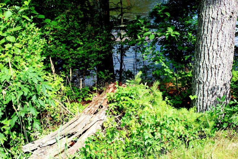 Vid sjön arkivfoto
