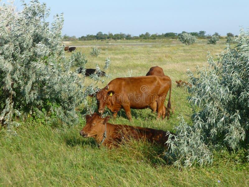 Vida animal en la granja fotografía de archivo libre de regalías