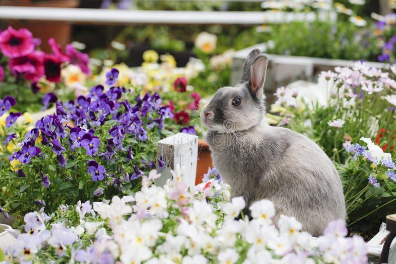 Vida com animais de estimação fotografia de stock royalty free