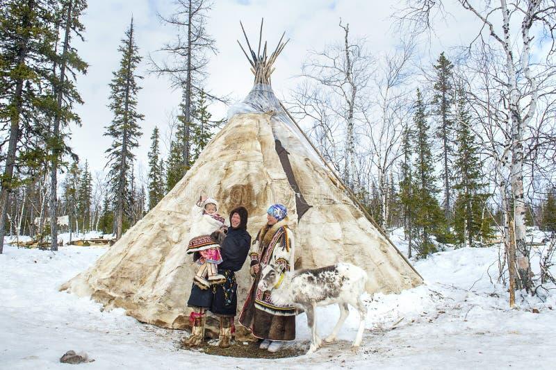Vida cotidiana de los pastores aborígenes rusos del reno en el ártico imágenes de archivo libres de regalías