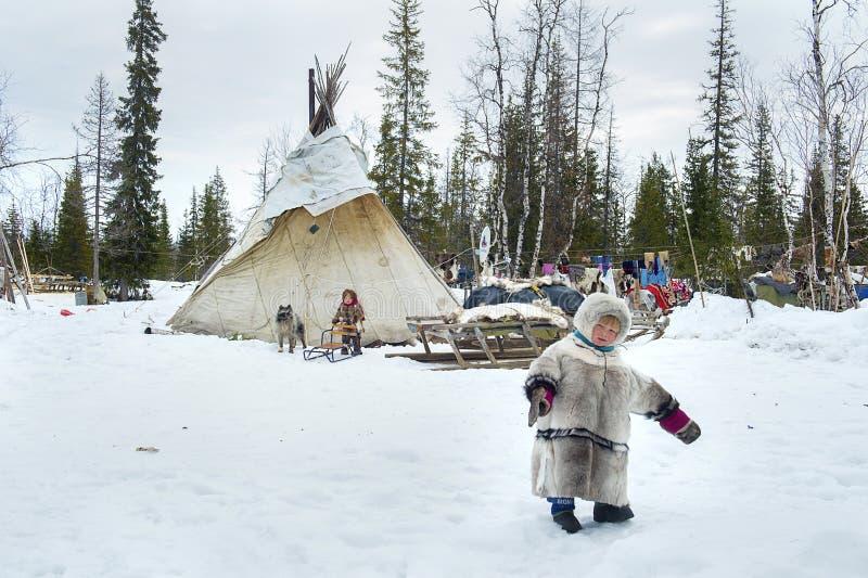 Vida cotidiana de los pastores aborígenes rusos del reno en el ártico imagenes de archivo