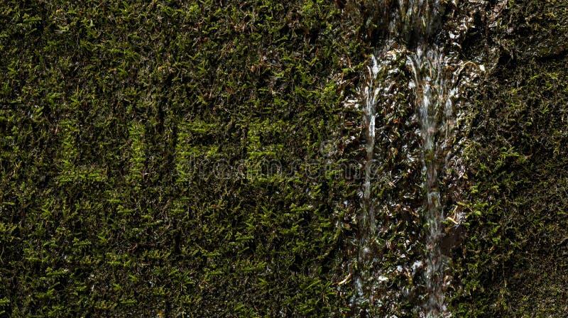 A vida da palavra escrita na textura orgânica fotografia de stock royalty free