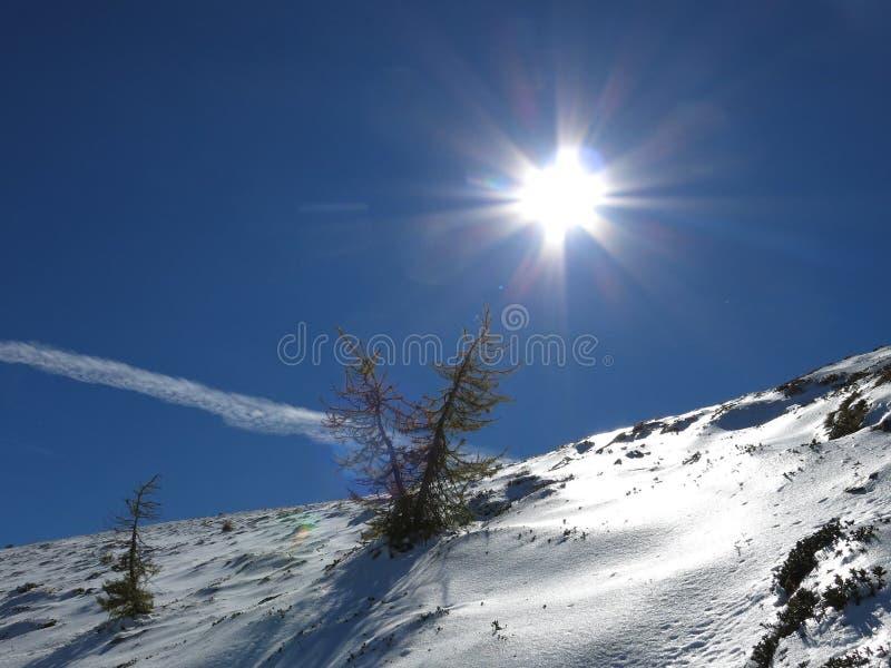 A vida de árvores ensolaradas em montanhas nevado fotografia de stock