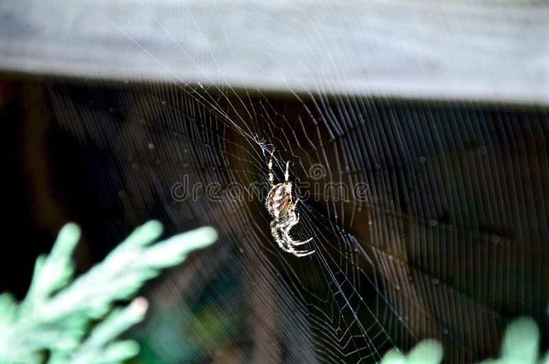 Vida de la araña imagen de archivo libre de regalías
