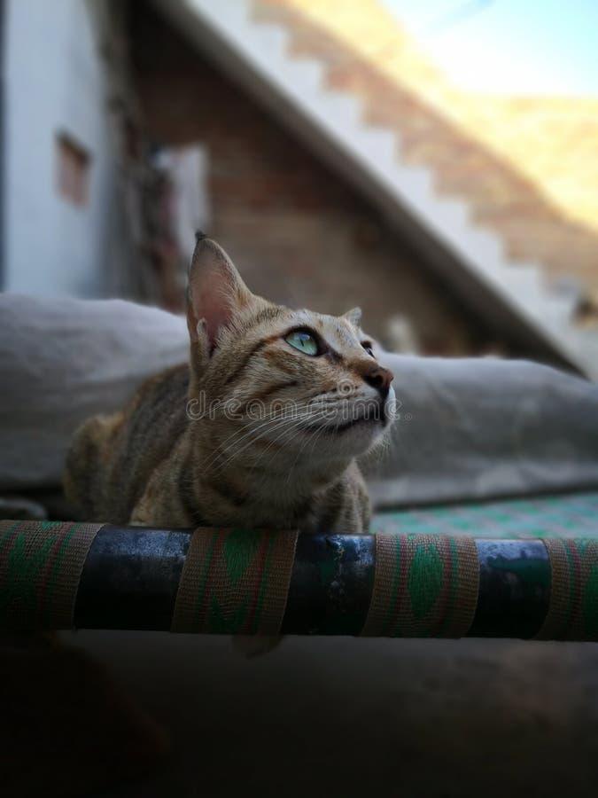 Vida de la familia de gato en el hogar foto de archivo