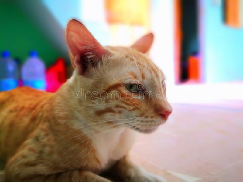 Vida de la familia de gato en el hogar imagenes de archivo