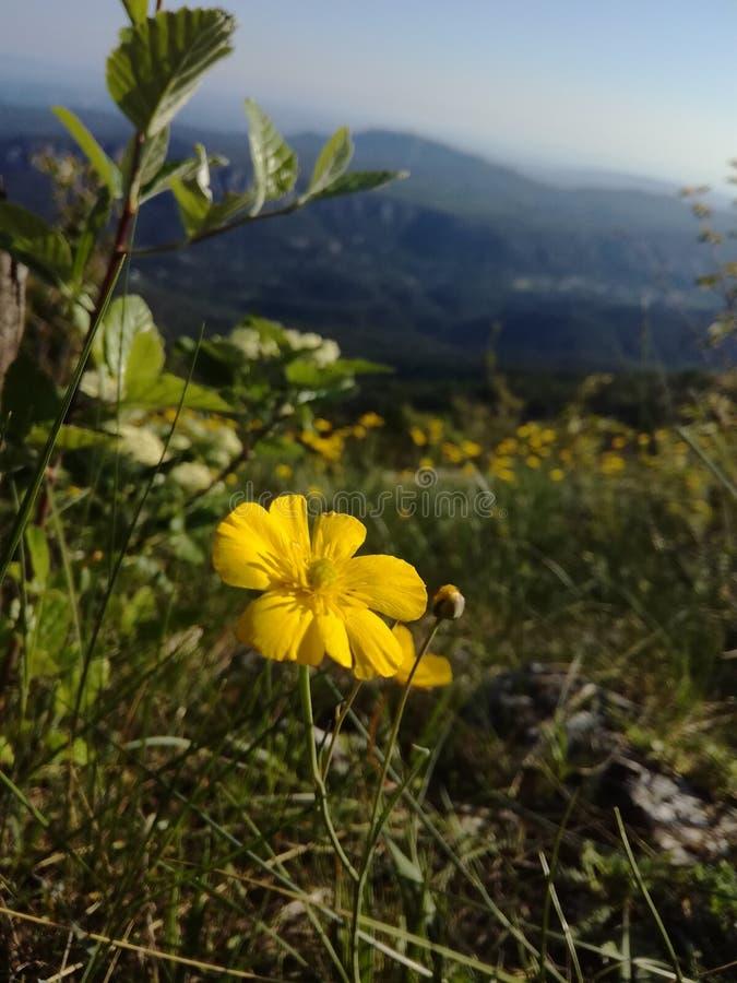 Vida de la flor fotos de archivo