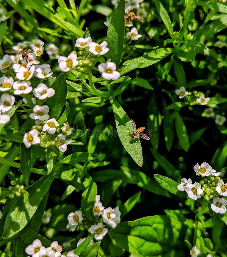 Vida de las pequeñas abejas imagen de archivo