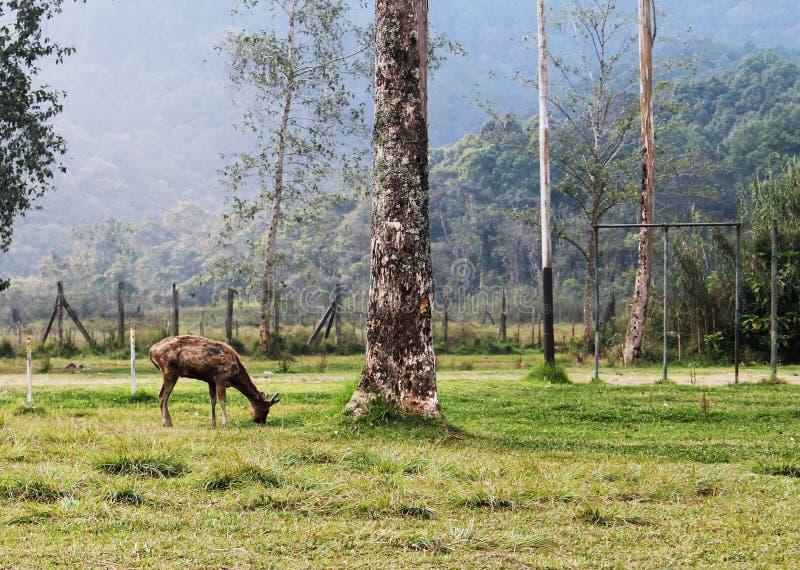 Vida de los ciervos imagen de archivo libre de regalías