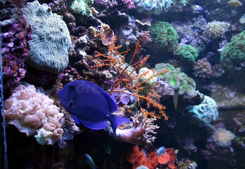 Vida de mar fotografía de archivo libre de regalías