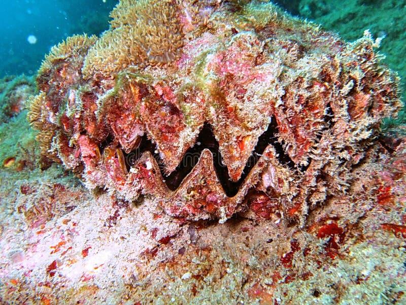 Vida de mar no recife coral imagens de stock