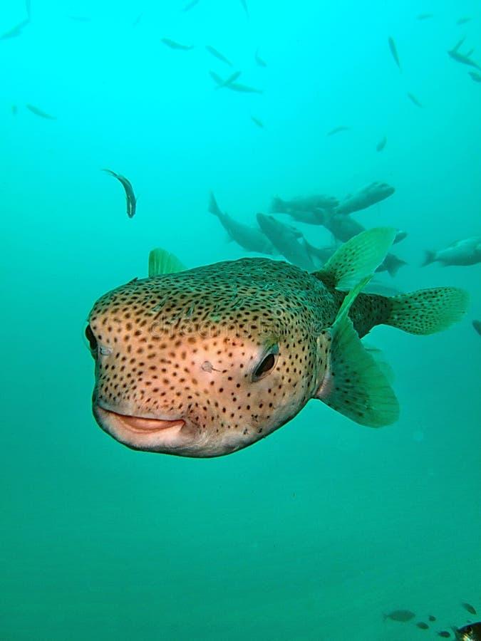 Vida de mar no recife coral foto de stock royalty free