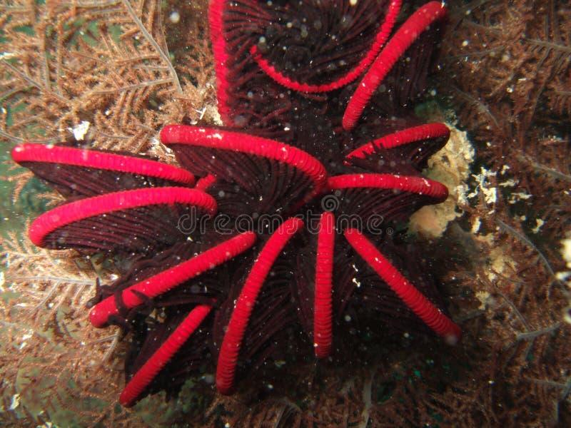 Vida de mar no recife coral fotos de stock