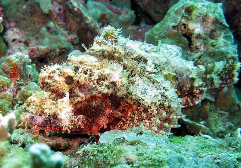 Vida de mar no recife coral fotografia de stock royalty free