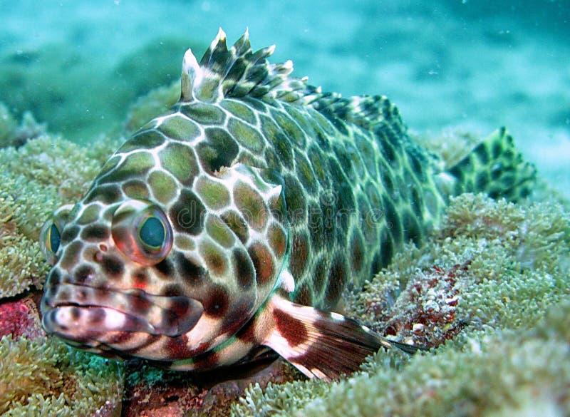Vida de mar no recife coral imagem de stock