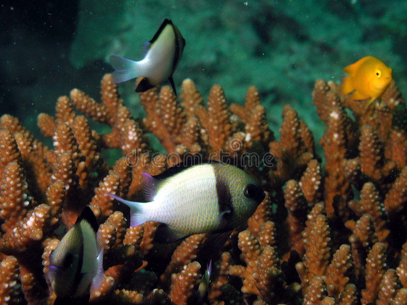 Vida de mar tropical fotos de stock
