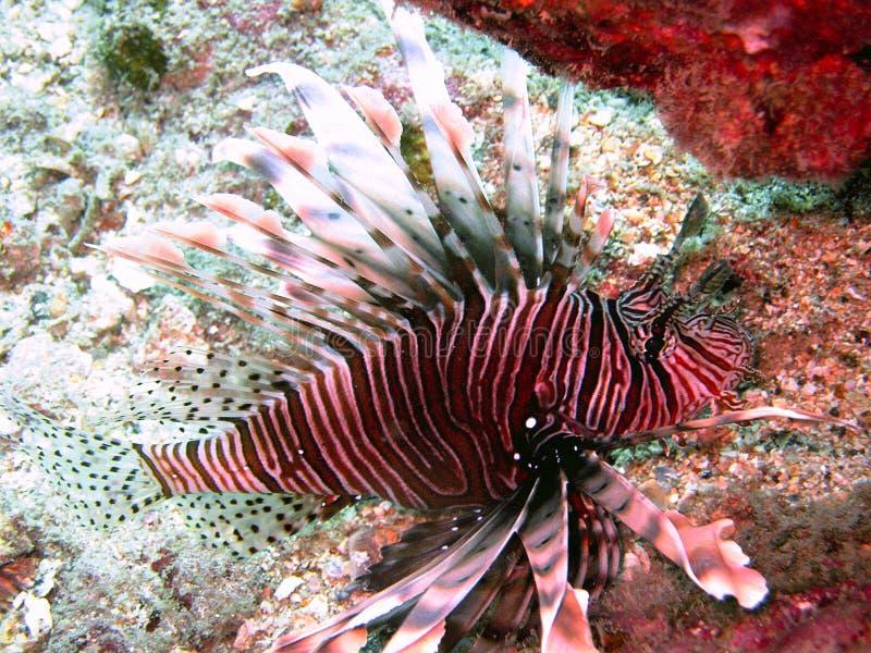 Vida de mar tropical imagem de stock royalty free