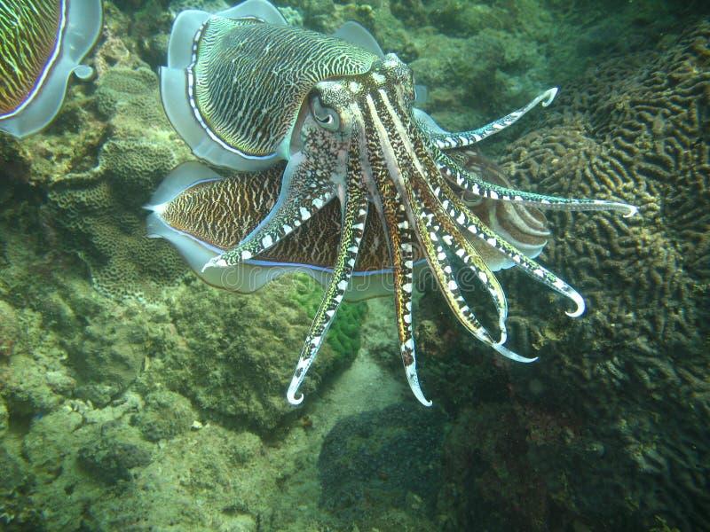 Vida de mar tropical fotografia de stock