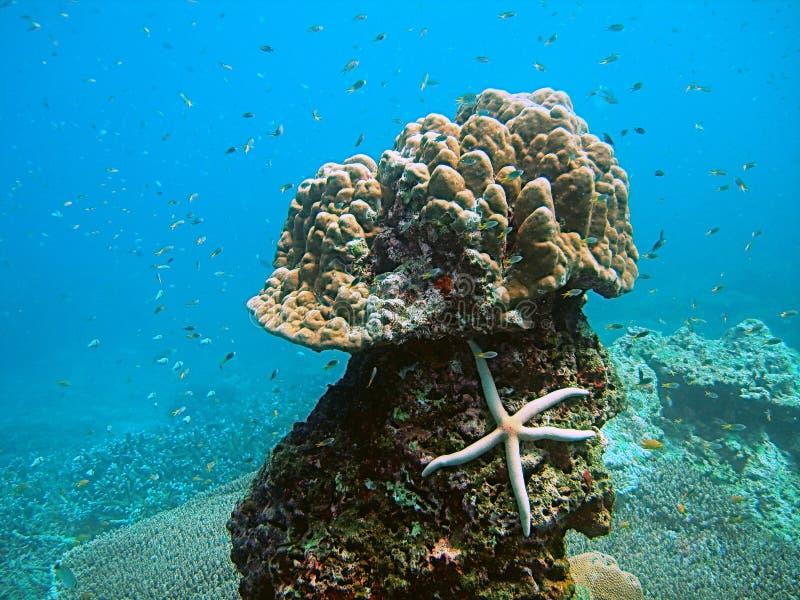 Vida de mar tropical foto de stock