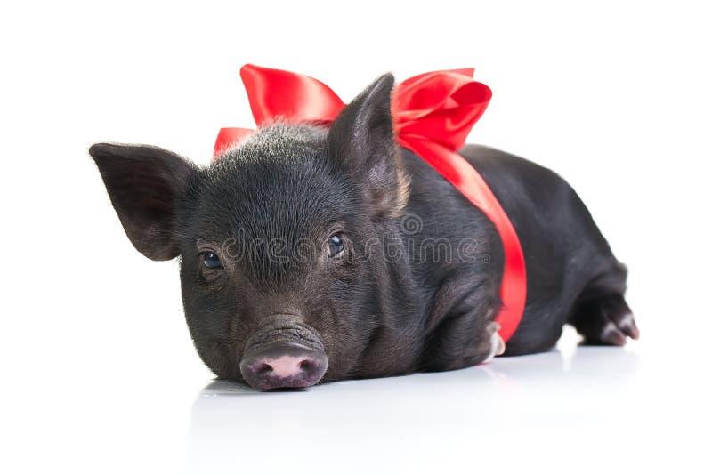 Vida de un cerdo fotos de archivo