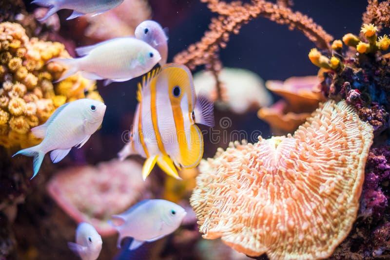 Vida debajo del mar - aguas tropicales imágenes de archivo libres de regalías