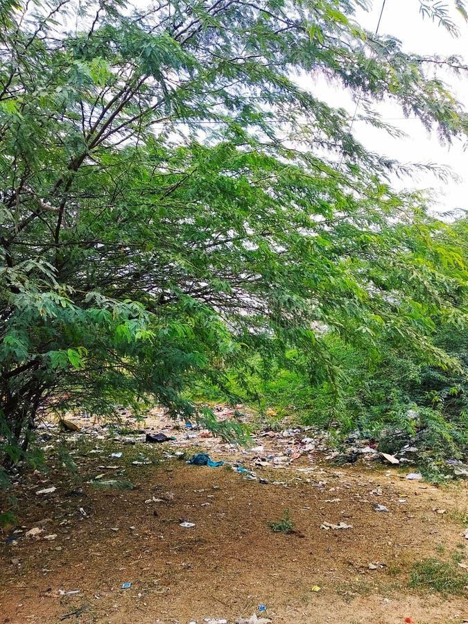 Vida del bosque del sur la India imágenes de archivo libres de regalías