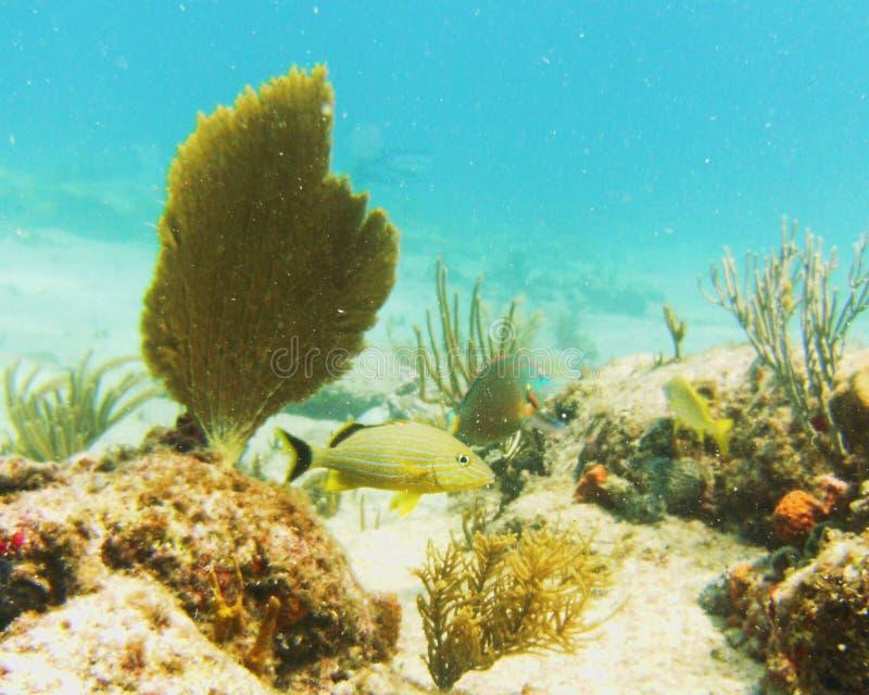 Vida del filón en la playa del amanecer, St. Maarten imagen de archivo libre de regalías