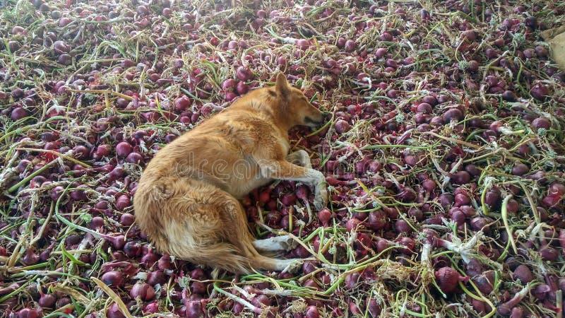 Vida del perro fotografía de archivo libre de regalías