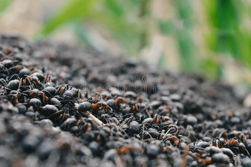 Vida do ` das formigas fotos de stock royalty free