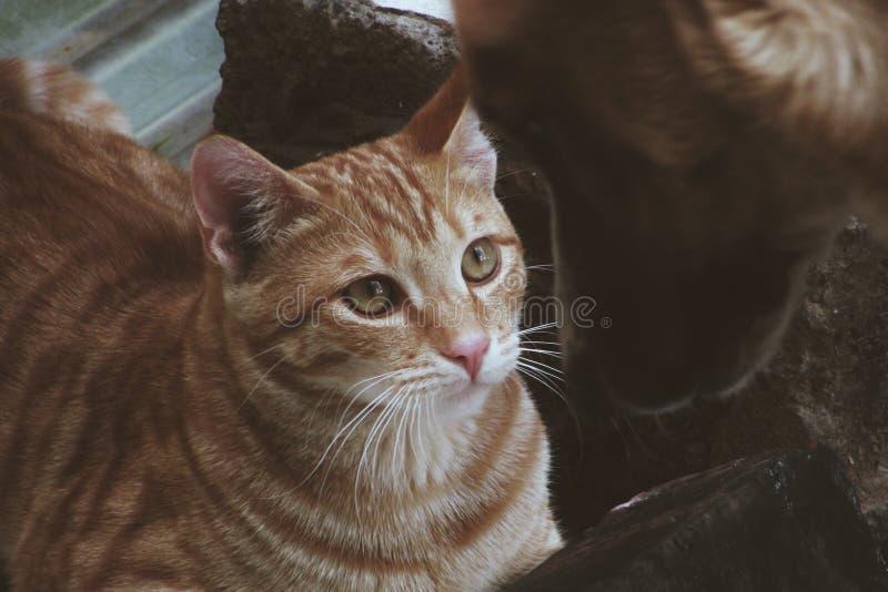 Vida do gato foto de stock royalty free