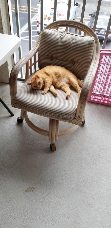 Vida do gato - It& x27; s tão duramente imagem de stock