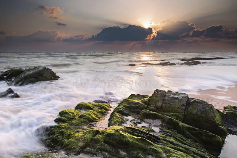Vida do oceano foto de stock