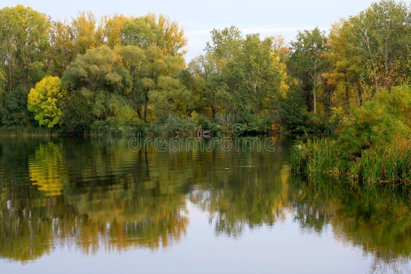 Vida do outono na natureza imagem de stock