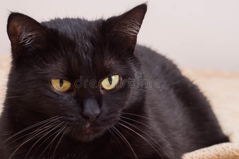 Vida dos gatos e dos povos como amigos imagem de stock royalty free