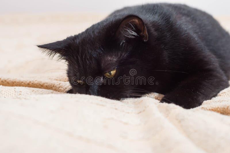 Vida dos gatos e dos povos no mundo moderno imagens de stock royalty free