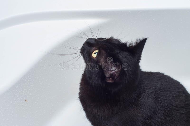 Vida dos gatos e dos povos no mundo moderno imagens de stock