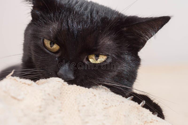 Vida dos gatos e dos povos fotos de stock