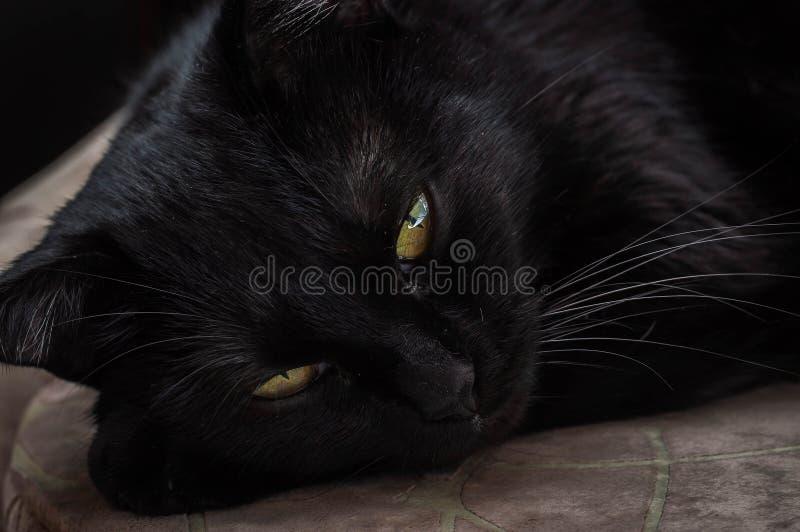 Vida dos gatos e dos povos fotografia de stock royalty free