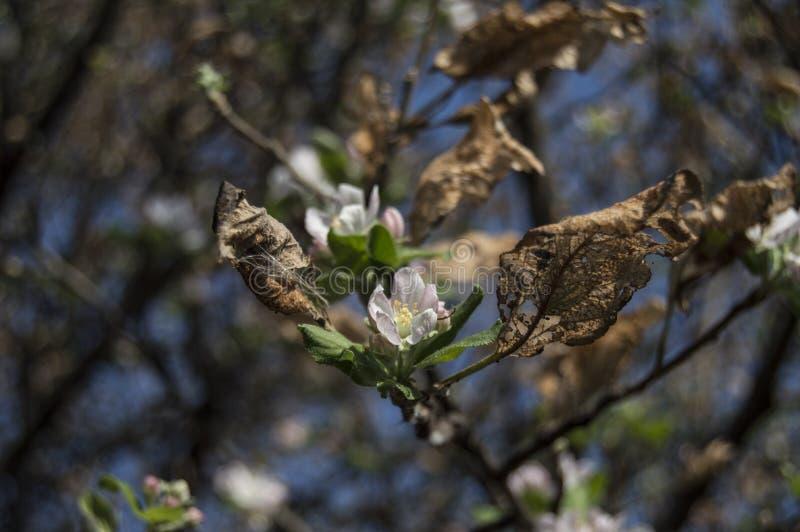 Vida e morte do betwin da natureza fotografia de stock royalty free