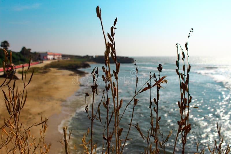 Vida en la playa foto de archivo