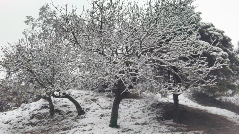 Vida en negro y blanco fotografía de archivo