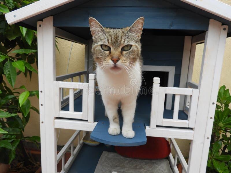 Vida exterior da casa do gato imagens de stock royalty free