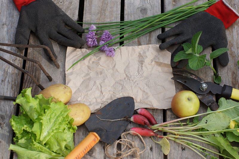 Vida imóvel brilhante no tema do jardim e da colheita, as ferramentas e os vegetais encontram-se em torno do papel para seu texto fotos de stock
