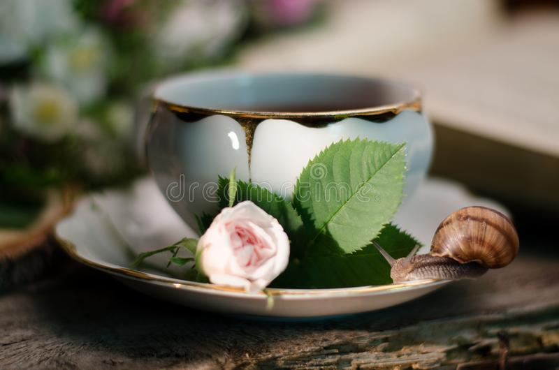 Vida imóvel do vintage com um copo de chá velho da porcelana, uma rosa pequena fresca, um caracol e um livro imagens de stock royalty free