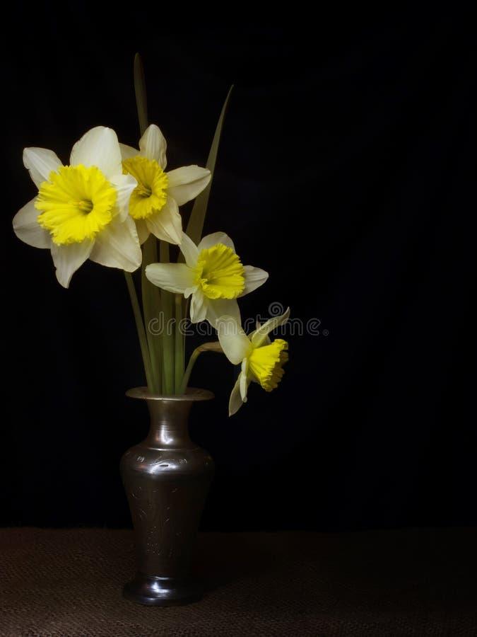 Vida imóvel dos narcisos amarelos da mola, estilo de pintura claro do claro-escuro, no vaso, com copyspace imagens de stock royalty free