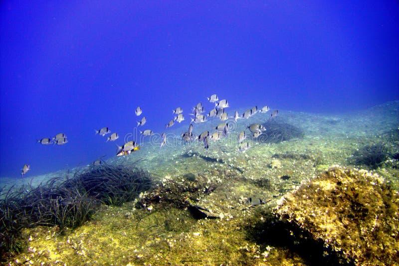 Vida marina imagenes de archivo