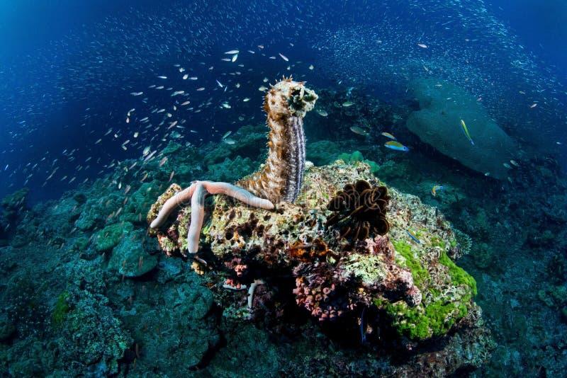 Vida marina fotografía de archivo
