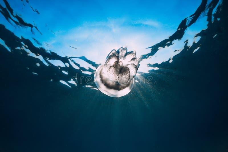 Vida marina con el submarino de las medusas en el mar fotografía de archivo libre de regalías