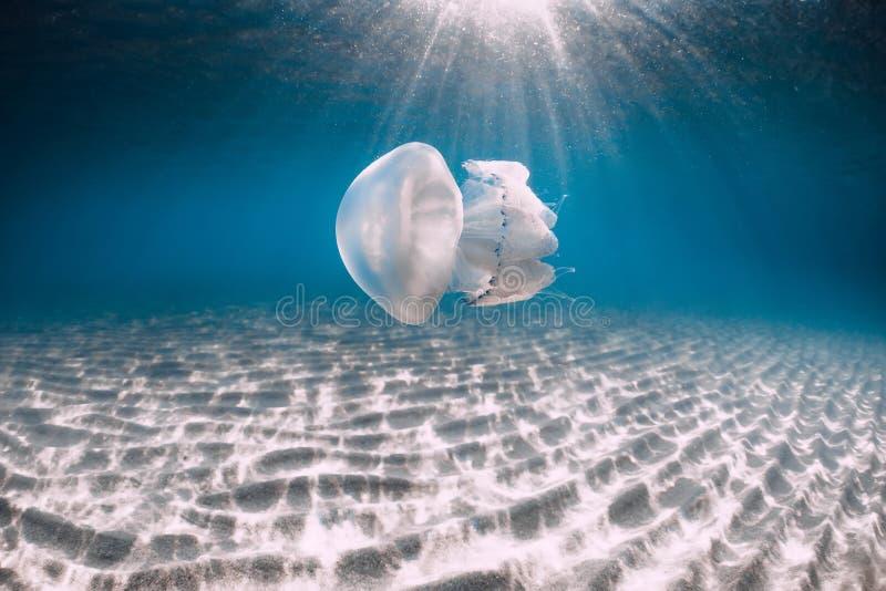 Vida marina con el submarino de las medusas en el mar azul con la parte inferior arenosa foto de archivo